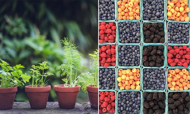 47 ätbara växter du kan odla (och skörda!) i kruka på balkongen