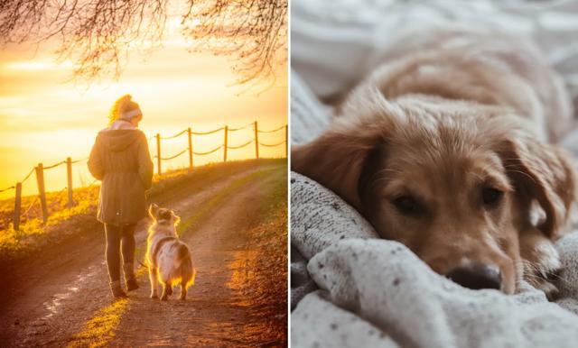 Forskning: Därför blir du hälsosammare av att skaffa hund