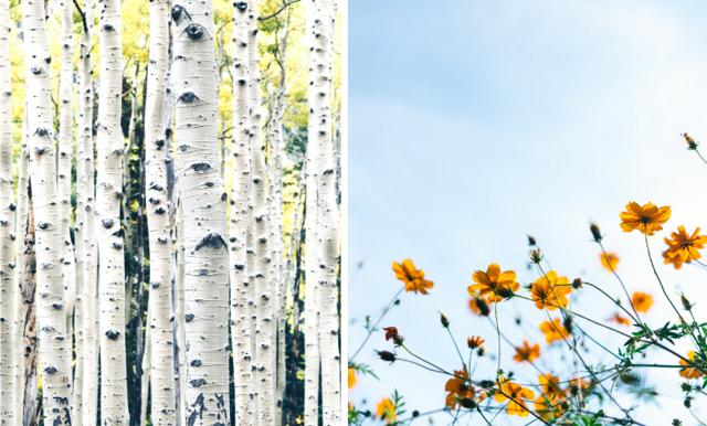 Corona, förkylning eller pollenallergi – så vet du