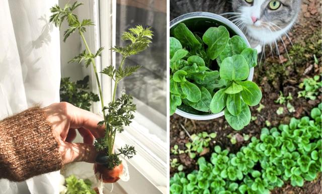 Allt du behöver veta för att börja odla din mat hemma