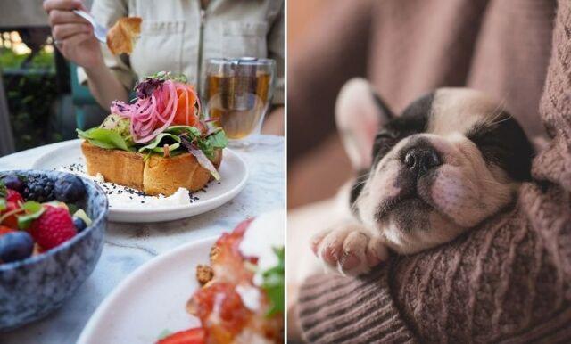 28 hundvänliga restauranger och caféer i Göteborg