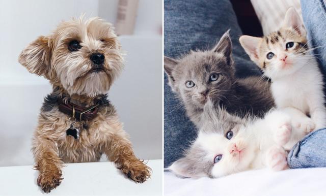 Studie visar: många skaffar husdjur för att öva inför en framtida föräldraroll