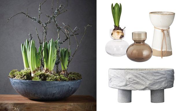 Säsong för hyacinter – så dekorerar du hemmet
