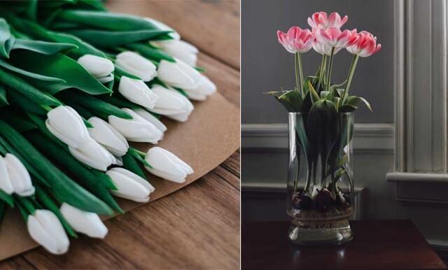 På fredag är det tulpanens dag – 7 sätt att få din bukett att se lyxigare ut
