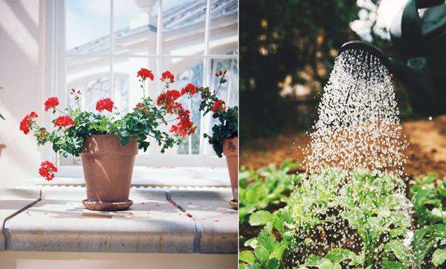 Dags att börja förså! 10 växtlampor som hjälper dig med odlingen
