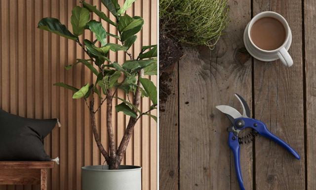Dags att plantera om dina växter – så gör du!