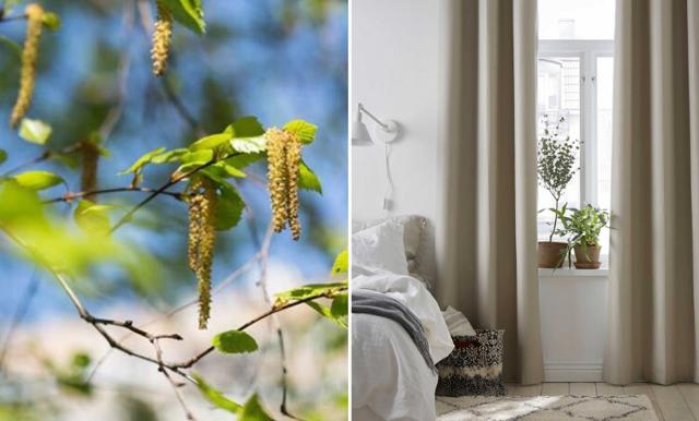 Nysig och snuvig av pollen? – Åtta tips för bättre luftkvalitet under pollensäsongen