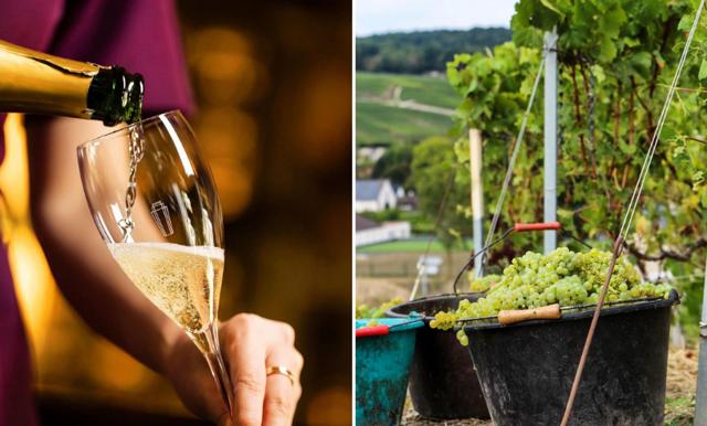 Cava, Prosecco, Champagne – vad är egentligen skillnaden?