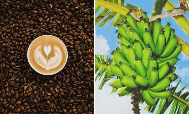 Ekotipset: 6 matvaror du bör byta till eko – direkt