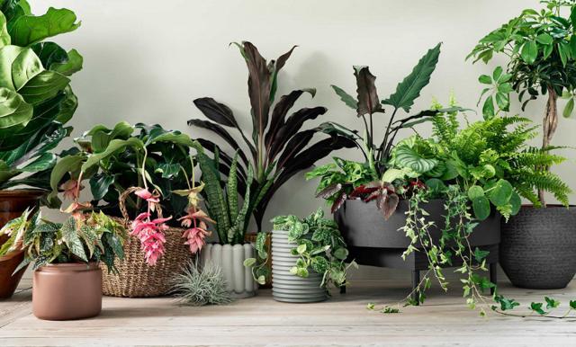 Nu lanseras Interflora Home – där blommor och växter möter inredning