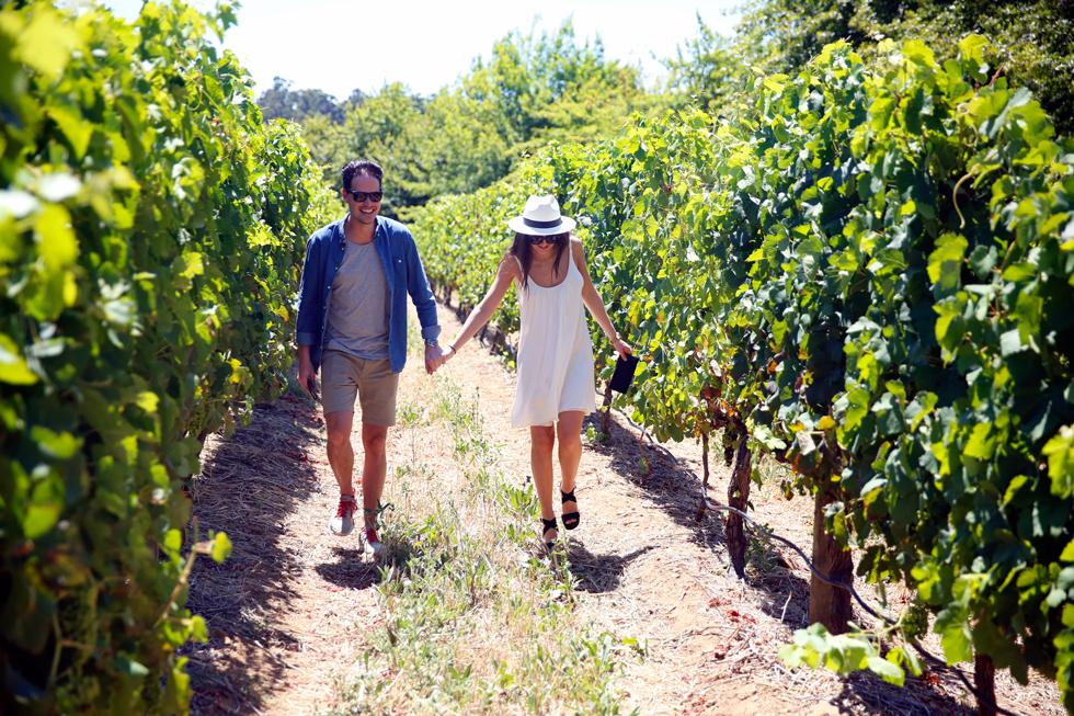 vingård-par