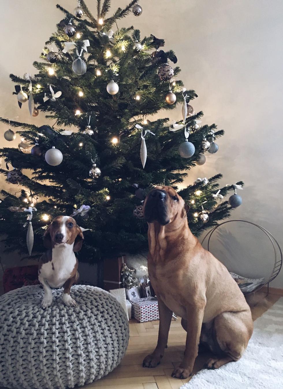 Julgran-Hundar