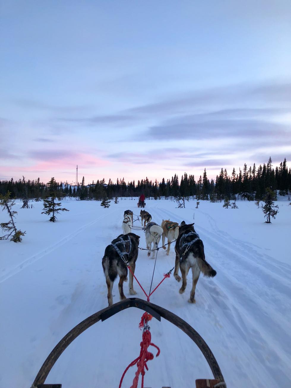 Åreguiden Hundspann Åre