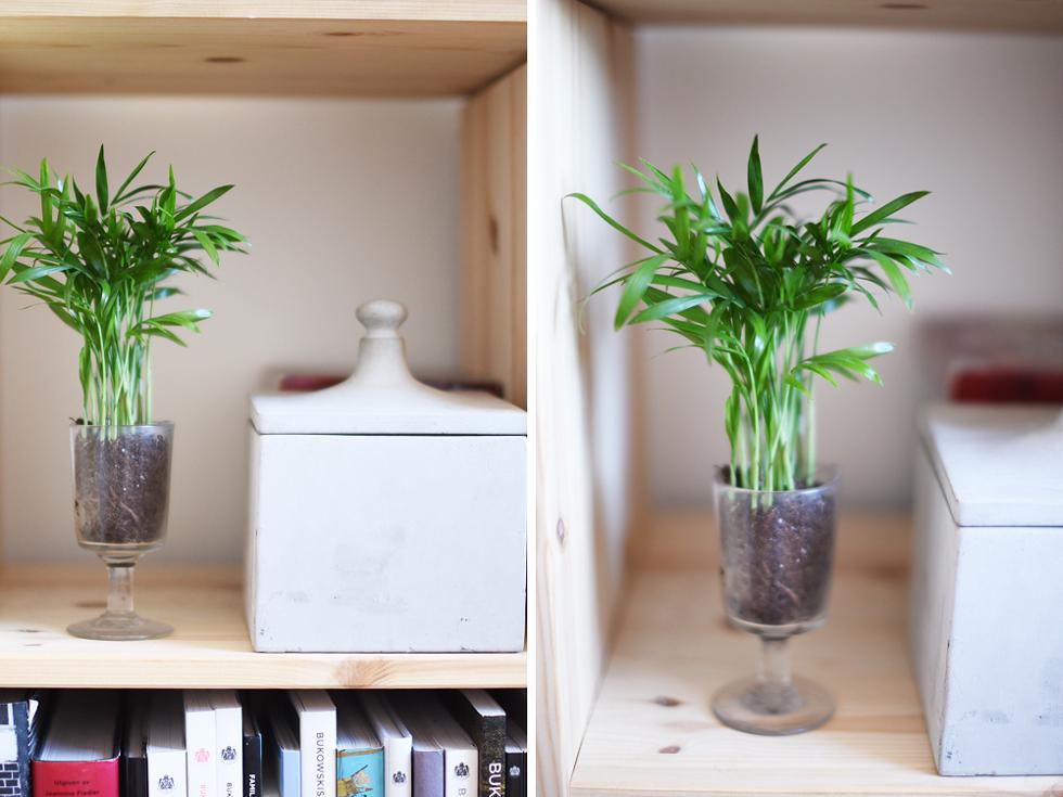 Bergspalm, Lättskötta krukväxter - Flora Wiström