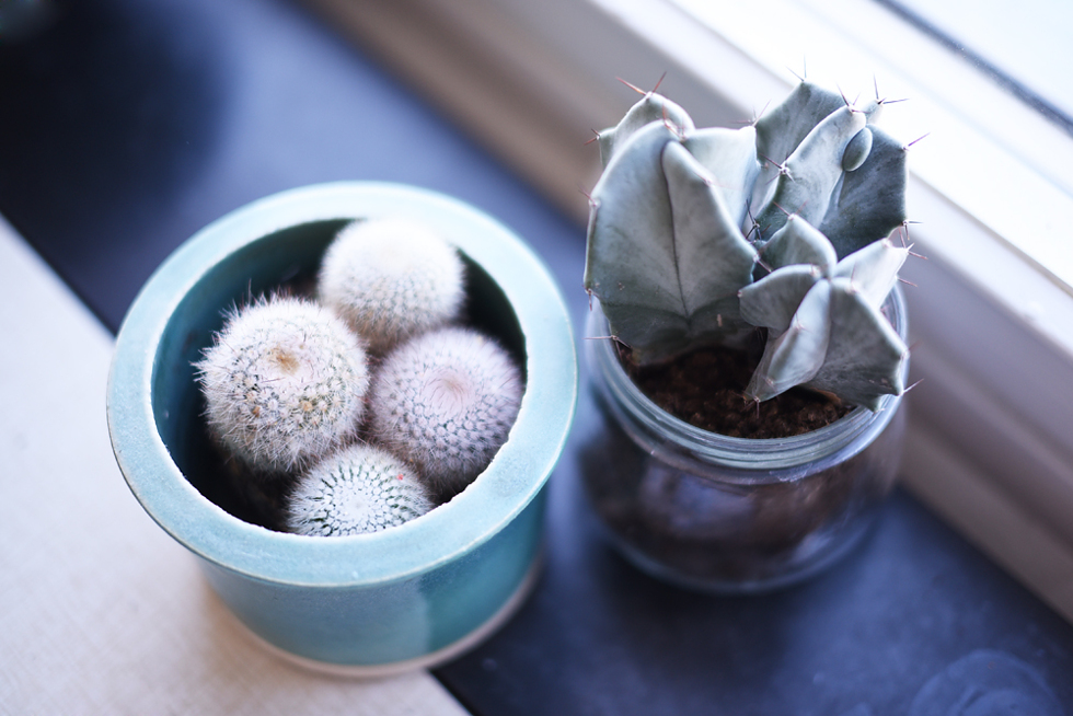 Kaktusar, Lättskötta krukväxter - Flora Wiström