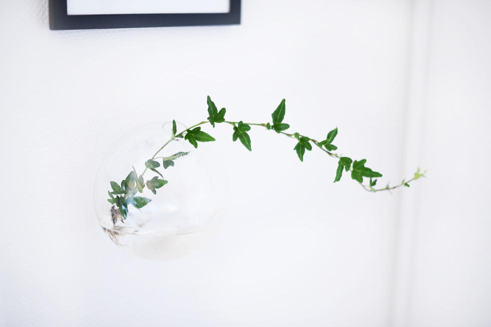 Murgröna i vatten, Lättskötta krukväxter - Flora Wiström