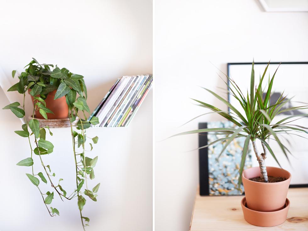 Murgröna och Dracaena marginata, Lättskötta krukväxter - Flora Wiström