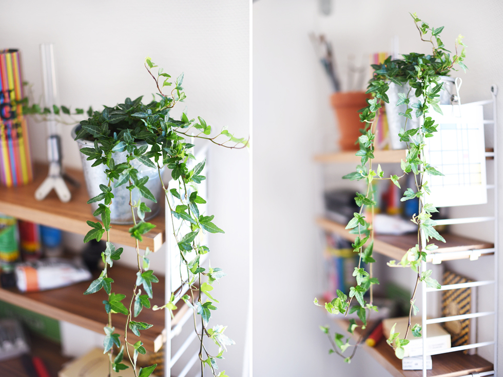 Murgröna, Lättskötta krukväxter - Flora Wiström