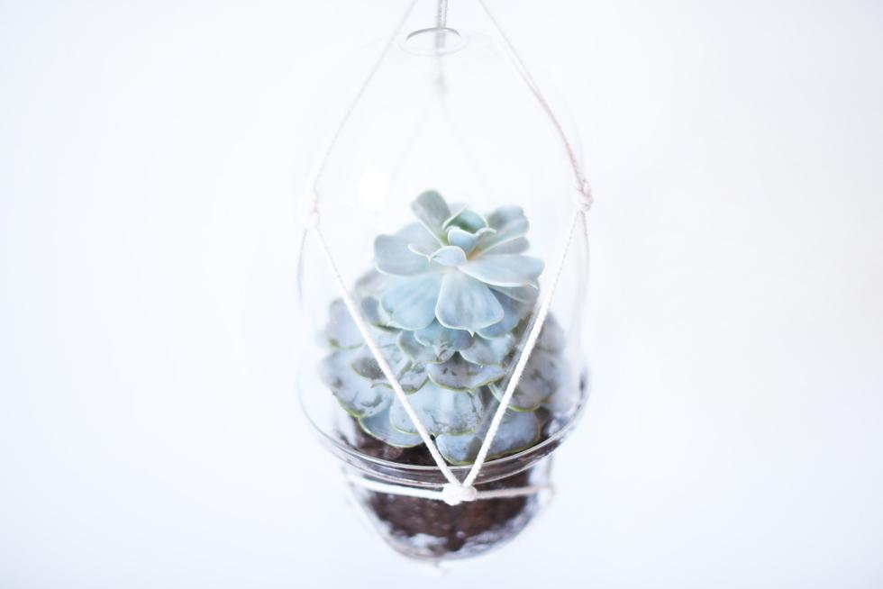Succulent, Lättskötta krukväxter - Flora Wiström