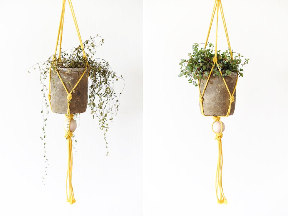 ledsenplantagladplanta