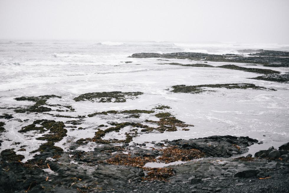 Island flora wistrom-73