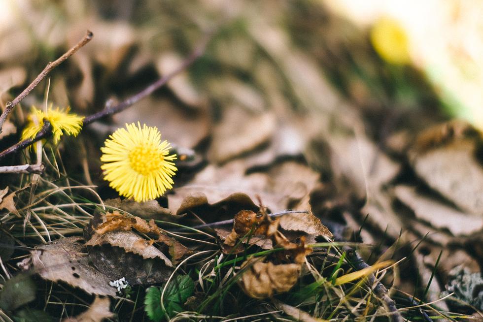 flora wistrom-121