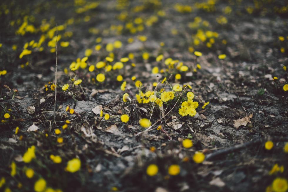 norrgården flora wistrom-18
