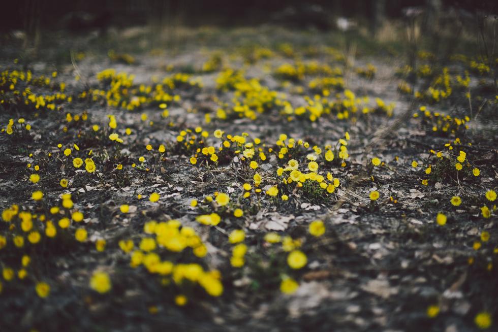 norrgården flora wistrom-19