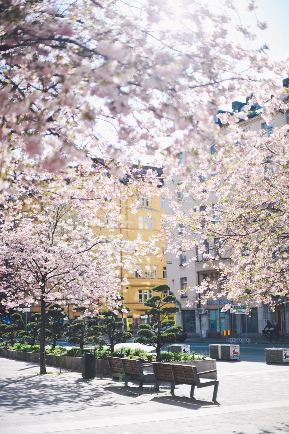 Bysistorget, Stockholm, florasblogg.se, @florawis