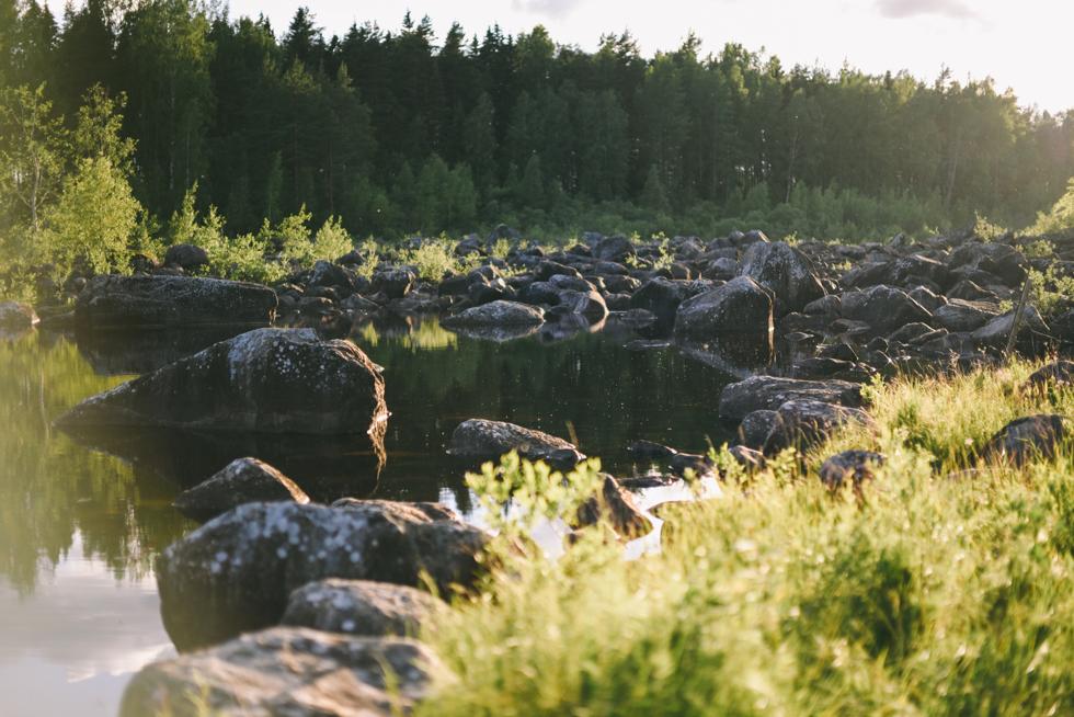 hälsingland flora wiström-10