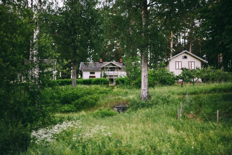 hälsingland flora wiström-3