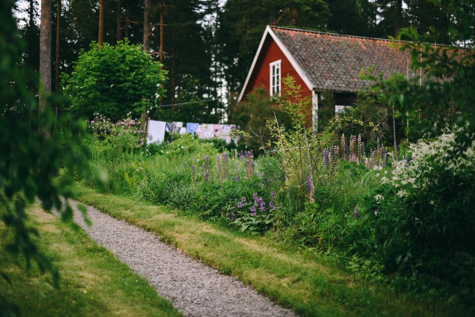 hälsingland flora wiström-4