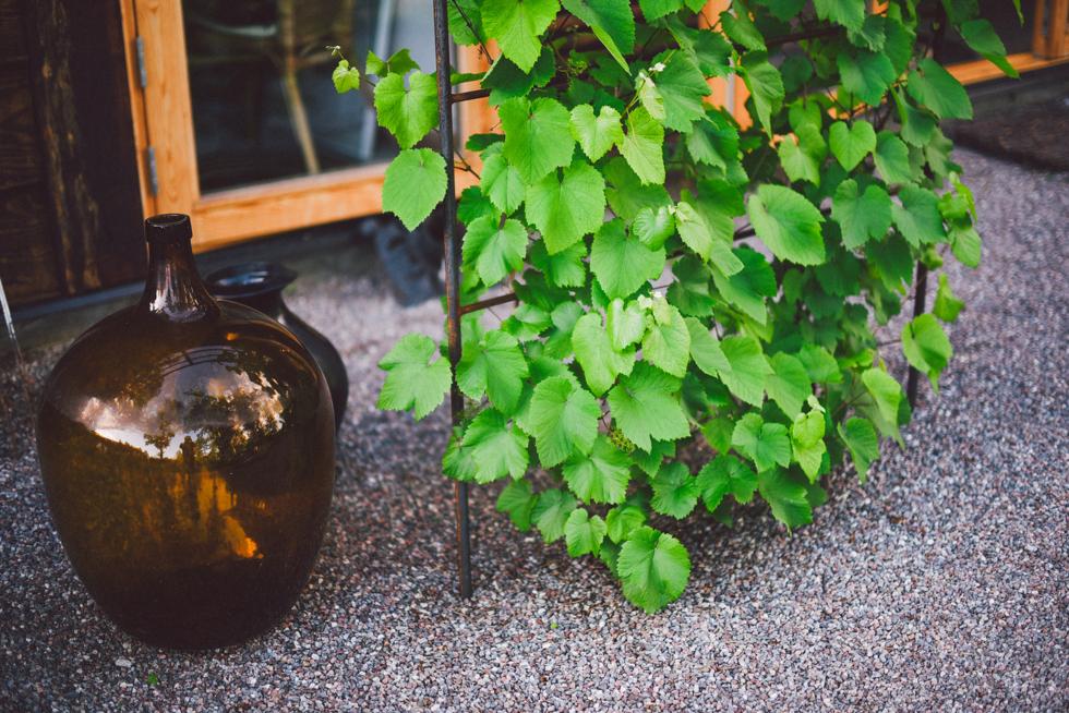 växthusfest flora wiström-12