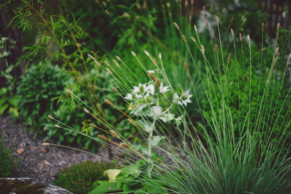 växthusfest flora wiström-3