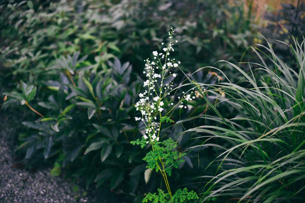 kummelnäs flora wiström-1