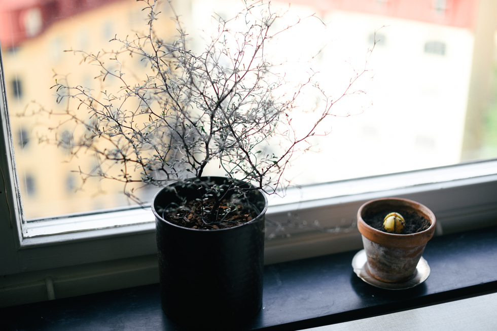 blomhav flora wiström -10s