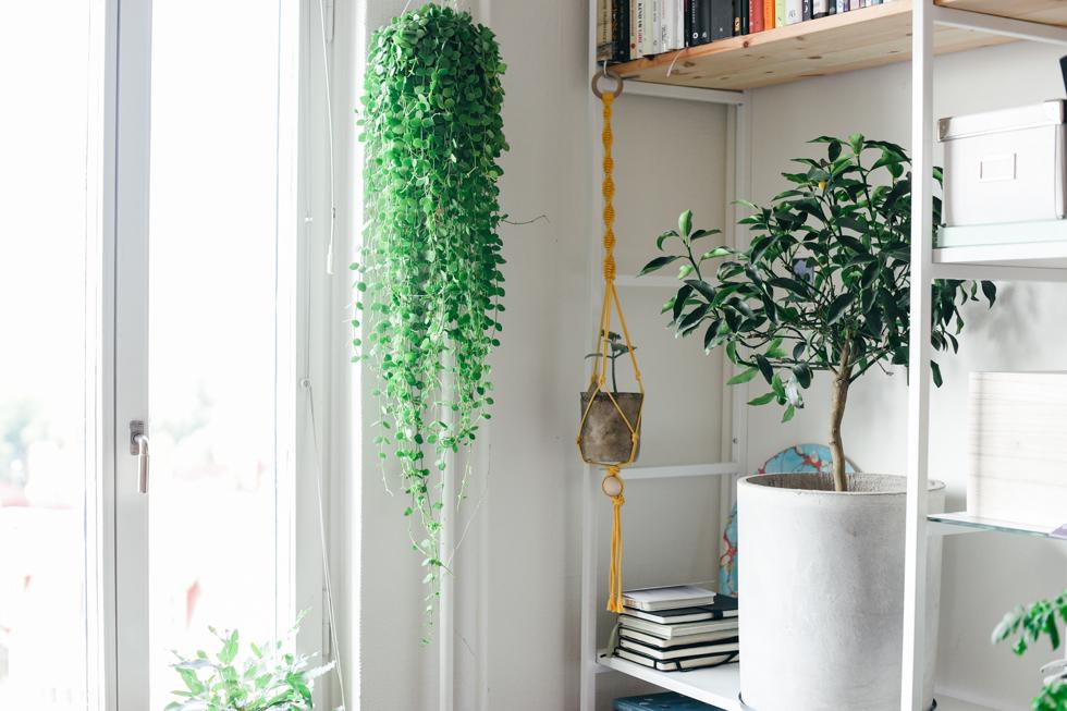 blomhav flora wiström -6s