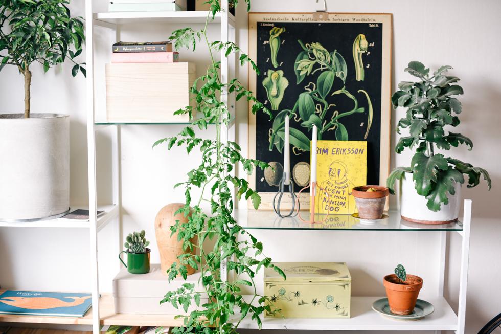 tomatplanta flora wiström -1s