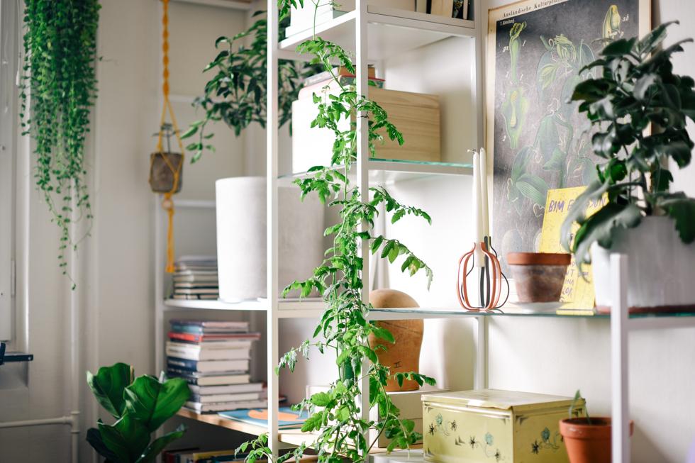 tomatplanta flora wiström -5s