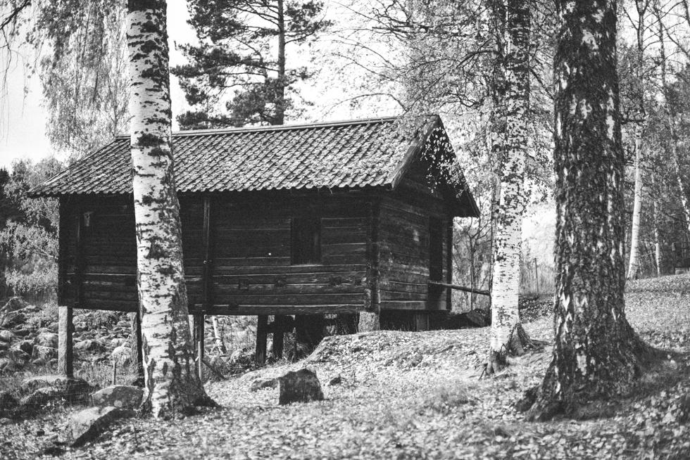 Hälsingland Flora Wiström -4s