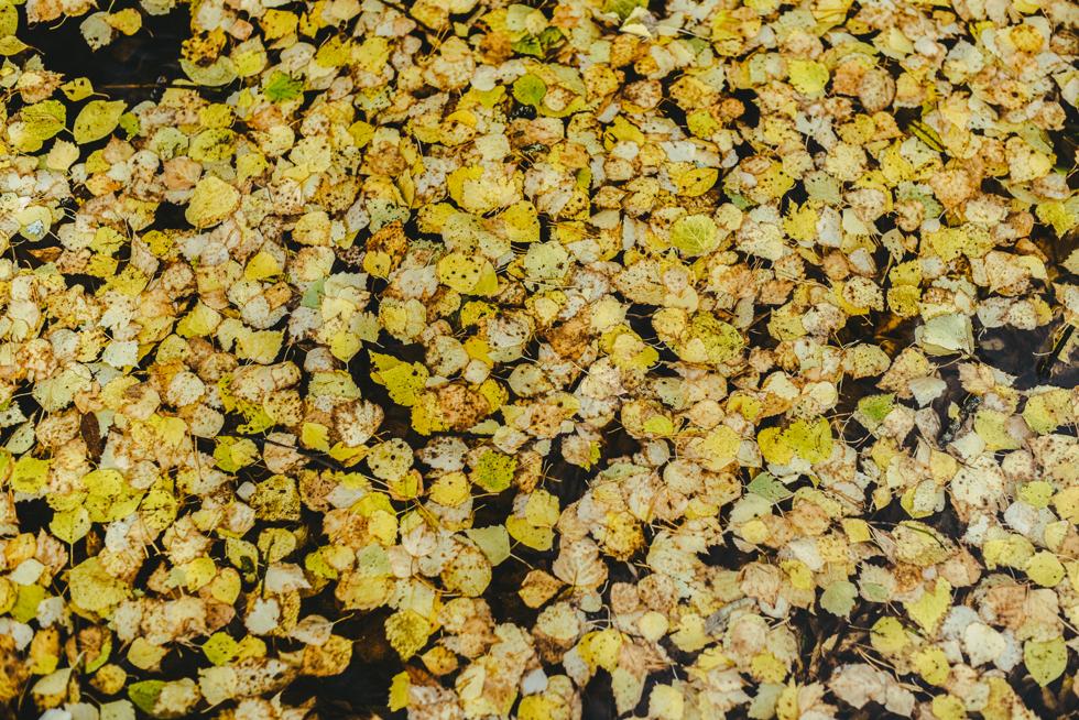 hälsingland isak flora wiström-12