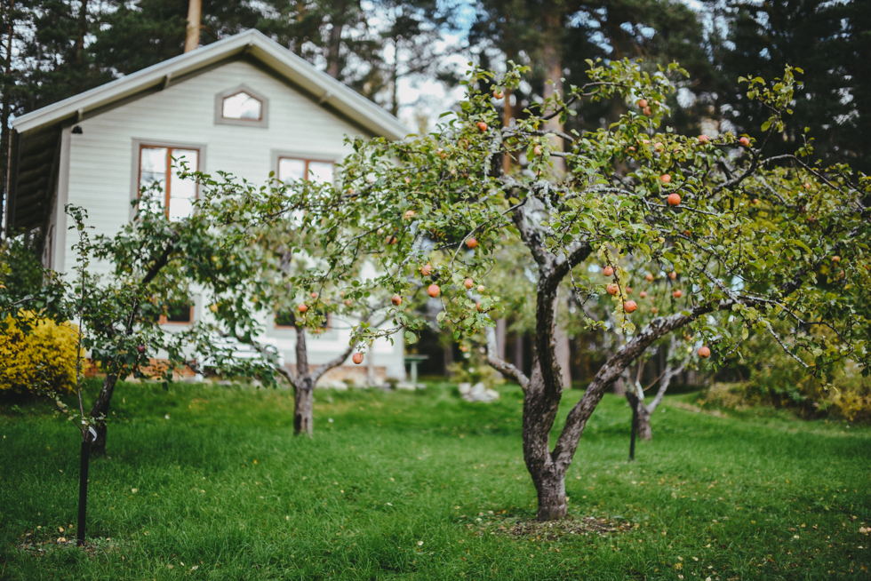 hälsingland isak flora wiström-20