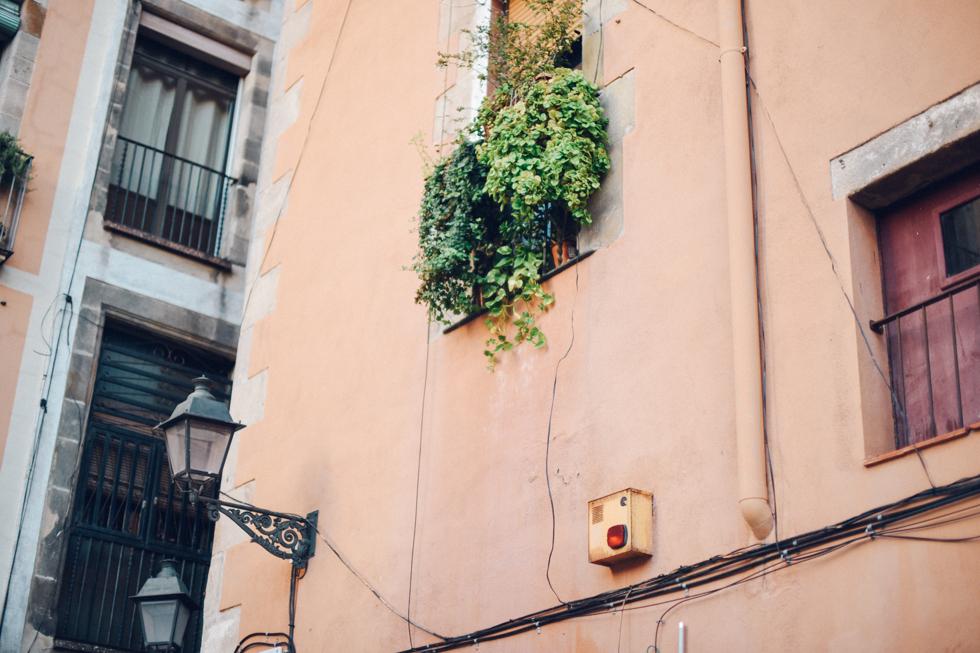 Yrsa Flora Barcelona19
