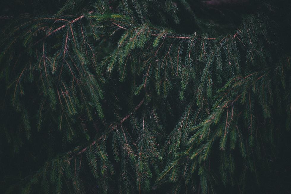 bcb-norrgarden-flora-wistrom54