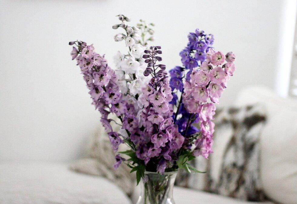 riddarsporrar-blommor