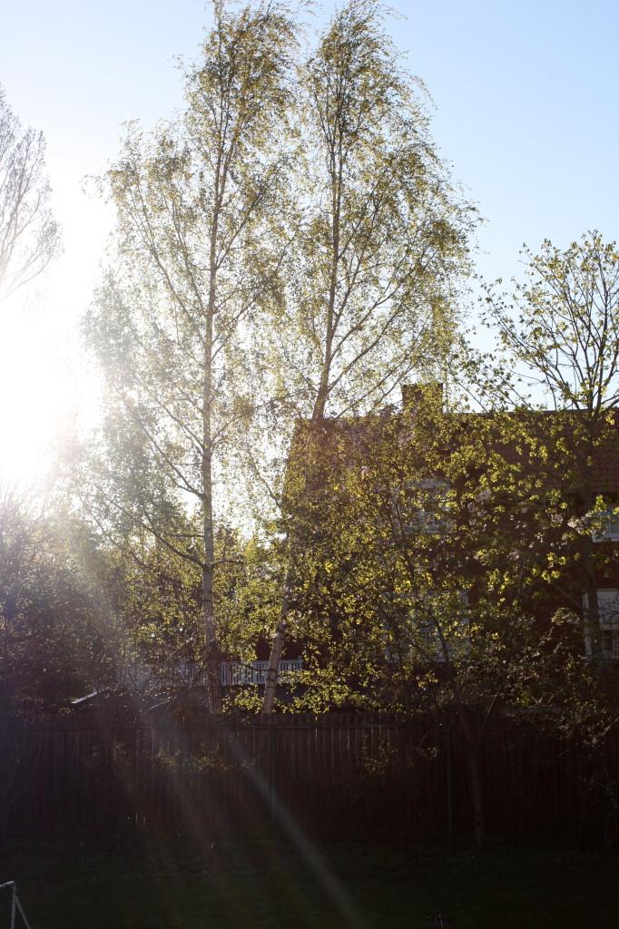 träd4