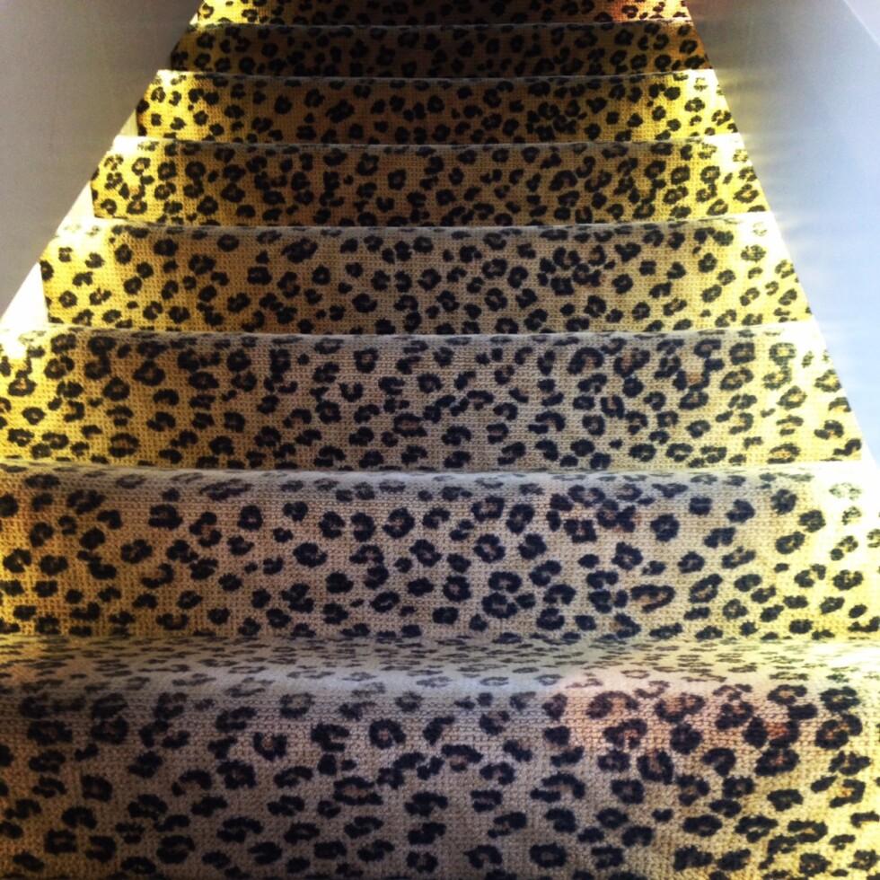 leopard trappa