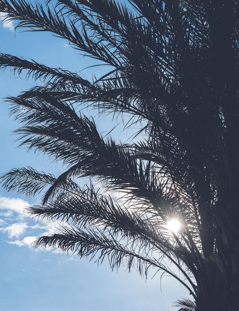 blogg-palm1