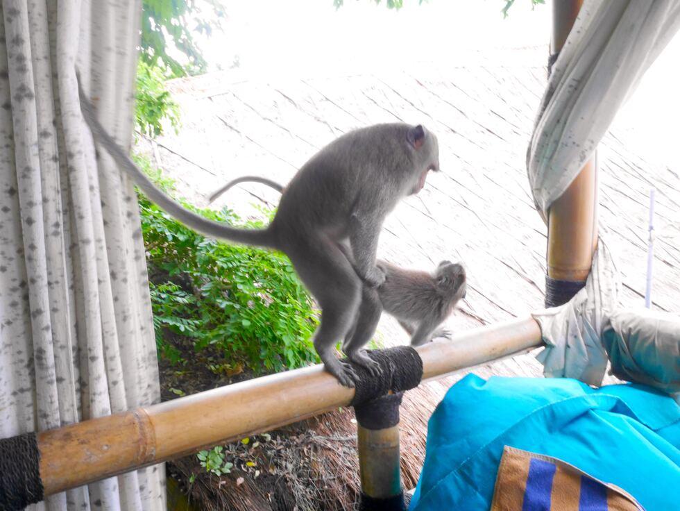 Monkry Bali 4