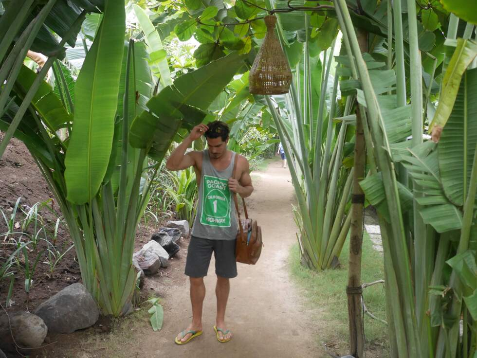 jungel Bali